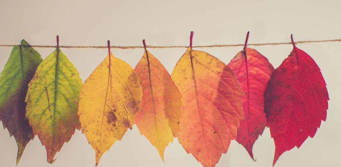 Hojas tonos otoño - Sentir - Psicólogos Embajadores Madrid